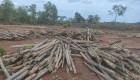 State sponsored illegal felling of Teak under the guise of 'reforestation'